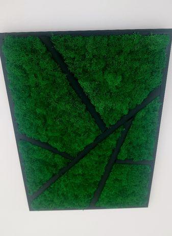 Obraz żywy, mech skandynawski chrobotek, 50x70, zielony las, nowoczesn
