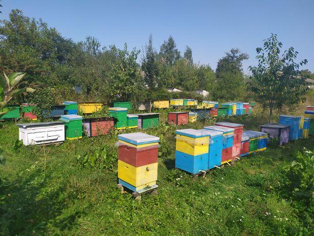 Бджолопакети доставка поштою