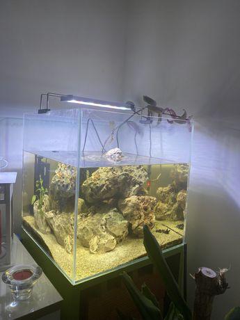 Aquario para peixes