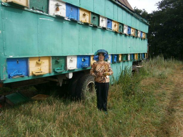 Павільйон для бджіл
