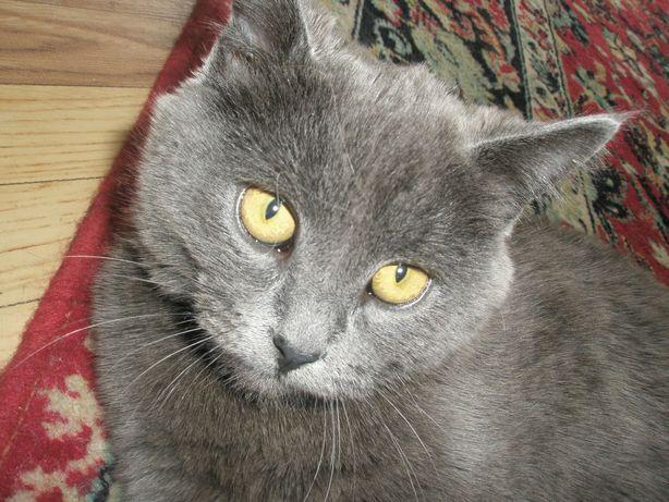 Потерялся кот Арни на подстанции.