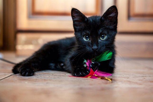 Черные котята мальчик и девочка в добрые руки
