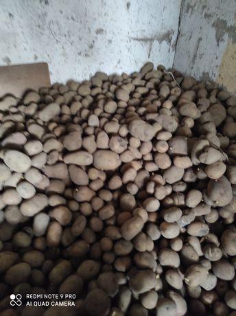 Sprzedam ziemniaki i słomę owsianą