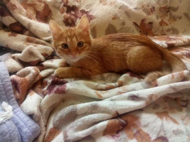 Рыжий мальчик 2,5 месяца