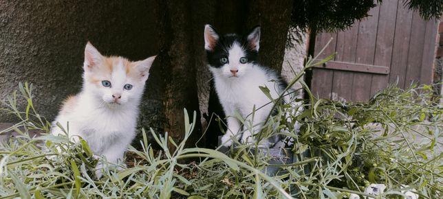 Małe kotki kolorowe