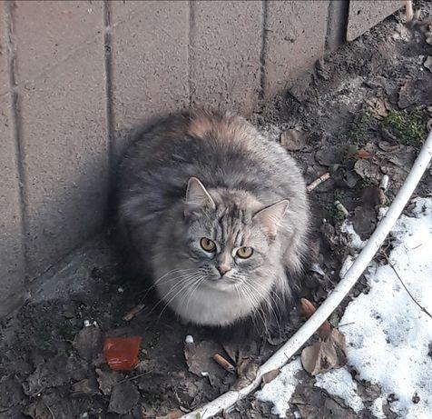 Замечена найдена серая кошка кот