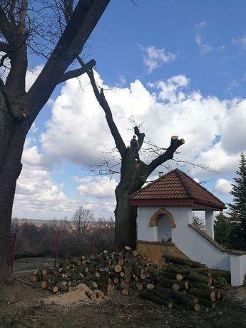 Wycinka drzew , scinka drzew metoda alpinistyczna