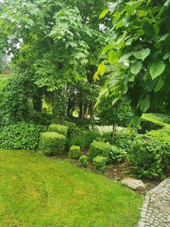 Pielęgnacja ogrodów, koszenie trawników,  prace porządkowe