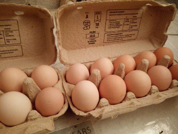 Jajka.  swojskie