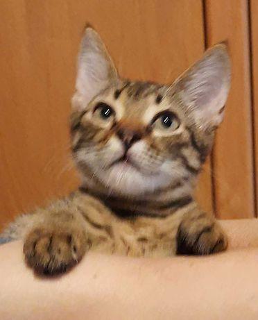 Ласковый, милый котенок в хорошие руки. Сами доставим