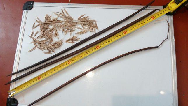 Катальпа звичайна (семена) 10 грам
