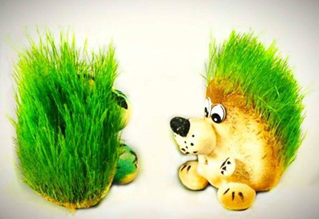 Самые красивые травянчики! Интересный подарок для детей. Пересылка