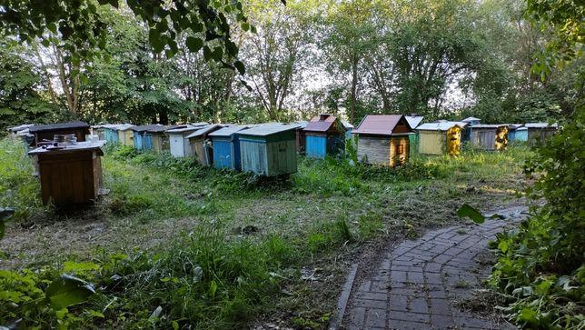 Ule z pszczołami 60 uli