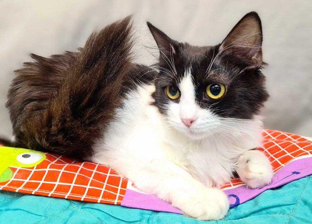Маленькое счастье - котенок Милана ищет дом, 6 мес, кошка, кот