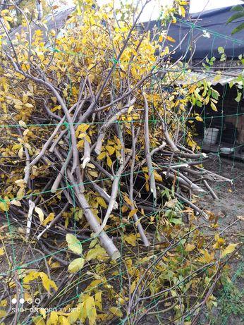 Ветки на дрова с ореха