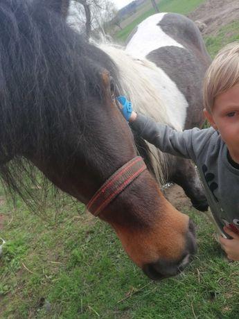 Oddam za darmo obornik konski