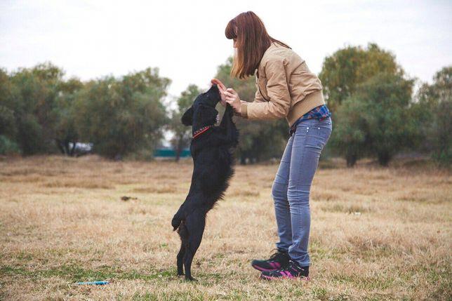 Выгул и передержка собак,возможно обучение командам