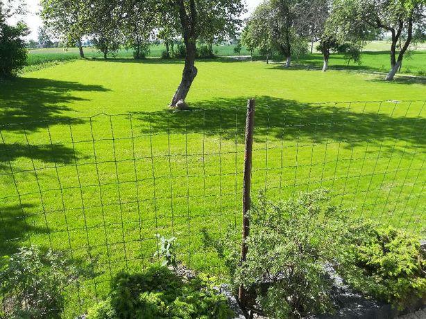 Nasiona trawy kostrzewa czerwona ARETA z Tarnowa Podgórnego