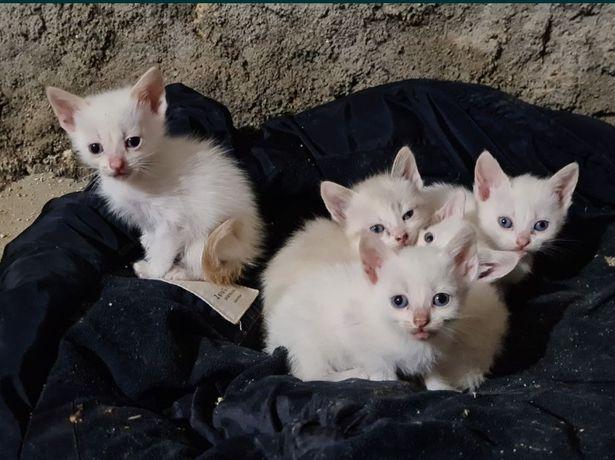 Gatinhos bebês para adoção