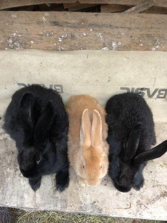 Продам кроликів. Продаються кролики. Зайці