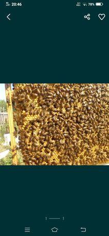 Отводки пчелосимей, пчел семьи
