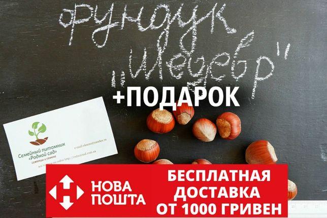 Фундук Шедевр семена 10 штук на саженцы(орех,насіння горіх на саджанці
