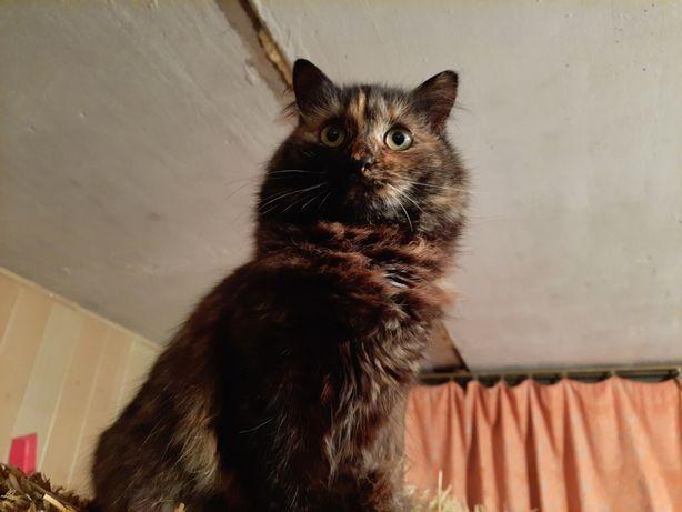 Пропала кошка, прошу помощи