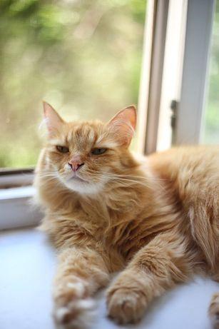 Кот Просто Обалденный.