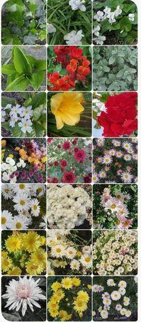 Обміняю кімнатні та садові квіти на керамічні горщики