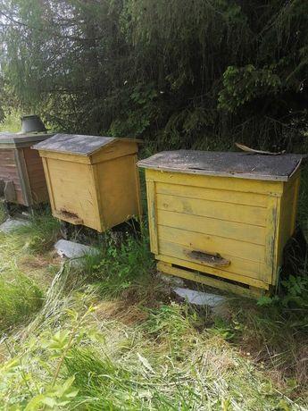 Pszczoły, rodziny pszczele w 6 ulach warszawskich poszerzanych