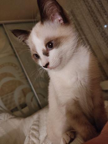 Котята бесплатно, кошенята мальчик и девочка кот и кошка