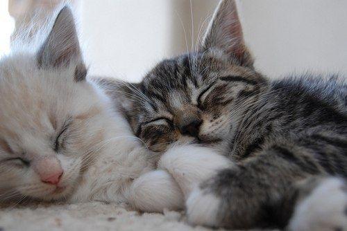 Домашня перетримка котиків.