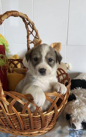 Щенок Хлоя 2 месяца собака собачка пёс