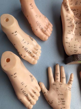 Model do akupunktury ucha stopy dłoni glowy