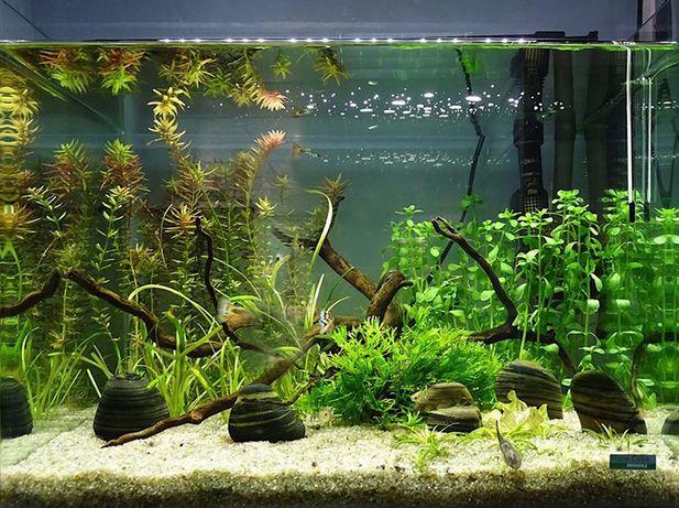 Чистка аквариумов не дорого