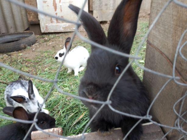 Кролики от хороших родителей