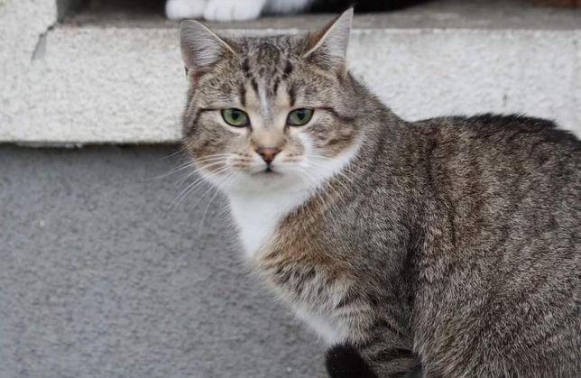 Asia- piękna kocia dama do adopcji