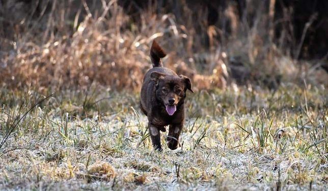 Cudowny bezproblemowy psiak szuka kochającego domku na zawsze
