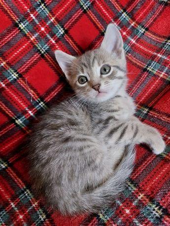 Отдам бесплатно котёнка 1,5 месяца