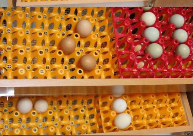Inkubator 300 jaj AUTOMATYCZNE sterowanie NOWY półautomat do kurzych