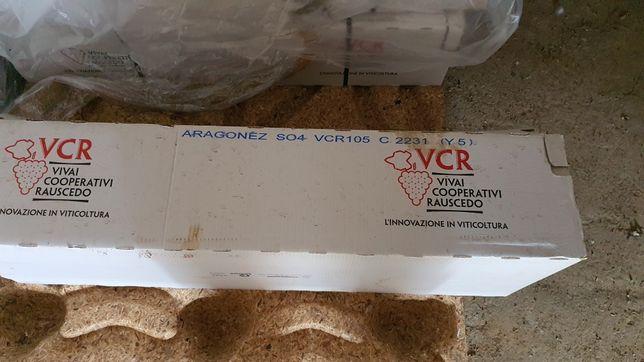 Bacelos Prontos para plantar Aragones
