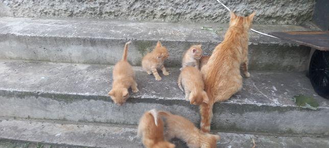 Котёнки рыжие девочки и мальчики