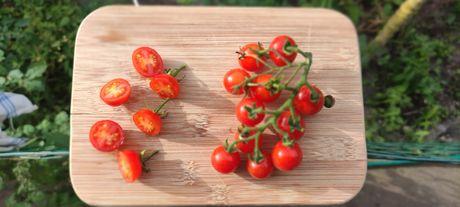 Tomate cherry - sementes