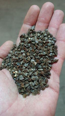 Гречка органічна, гречиха органическая, organic buckwheat
