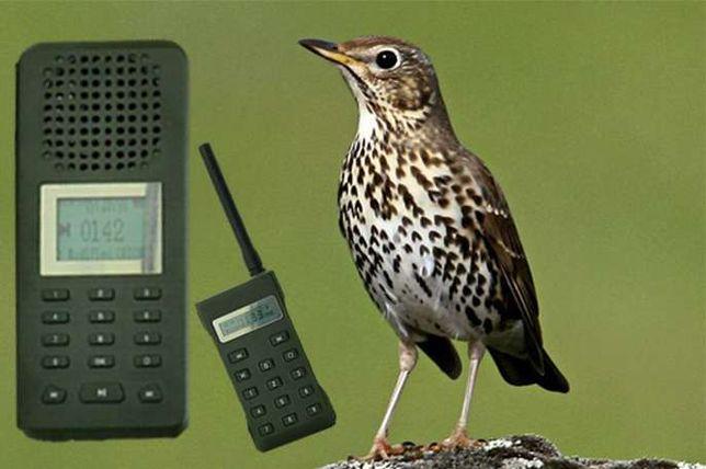 Chamariz electrónico de caça especial Tordo ou Pintassilgo