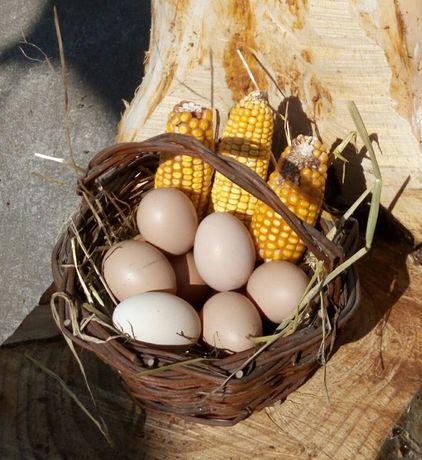 Ovos Caseiros do Campo (Dúzia 2€)