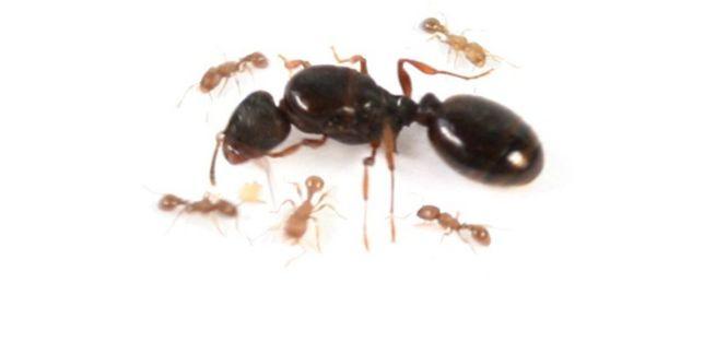 Продаю мурах тетріки