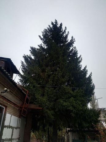Продам ёлку, ель, живое дерево.