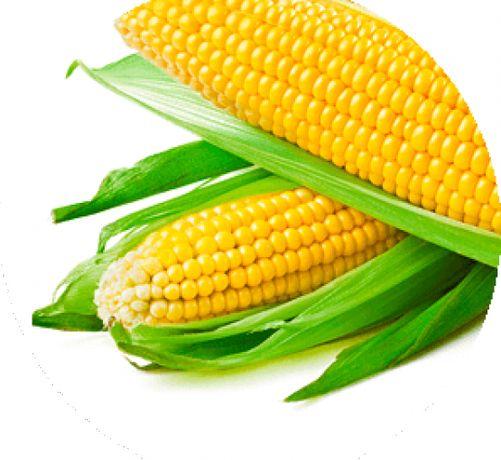 семена сахарной кукурузы Дейнерис F1(Барселона)