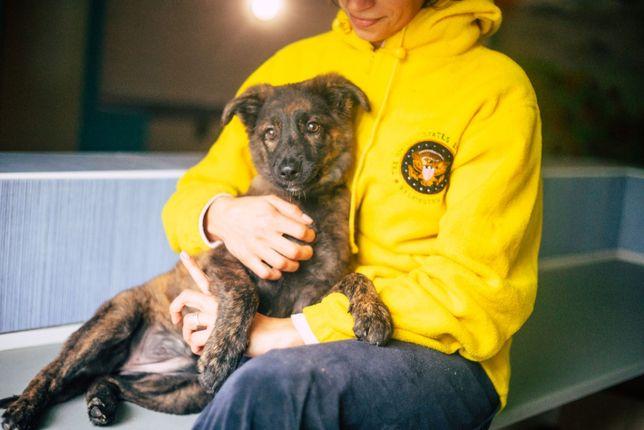 Девочка красавица в поиске самой заботливой семьи, щенок щенки